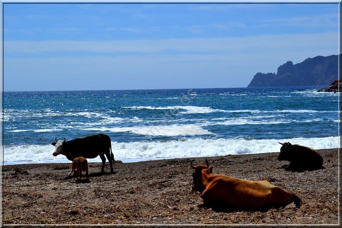 Sur la plage de Tuara