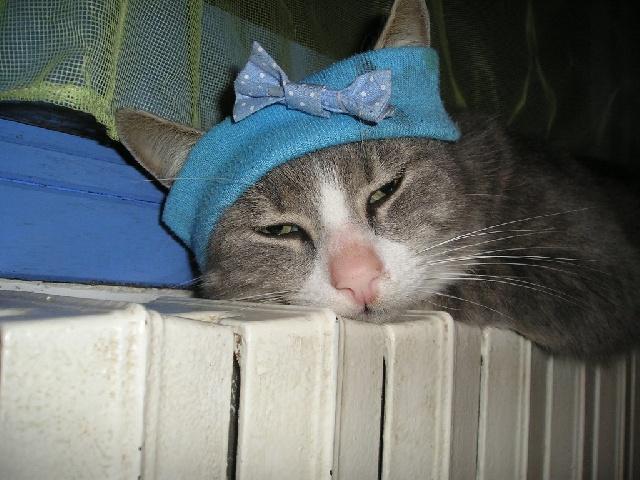 Toto avec un bandeau