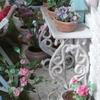 Fleurs 16.jpg
