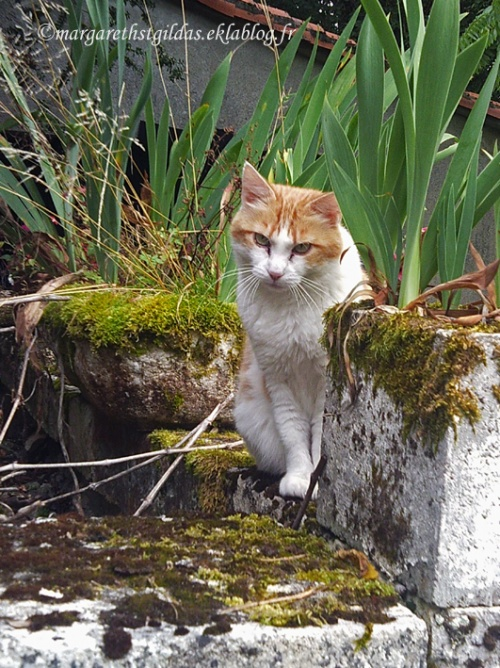 Chats, chats, chats - Cats, cats, cats