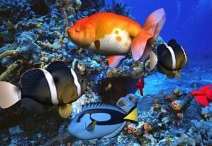 Treasure hunt - Under water