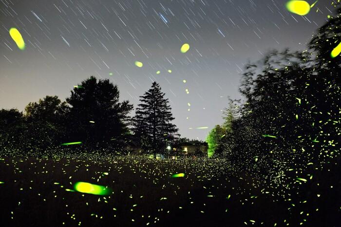 Un cimetière de lucioles tout droit sorti d'un conte de fées
