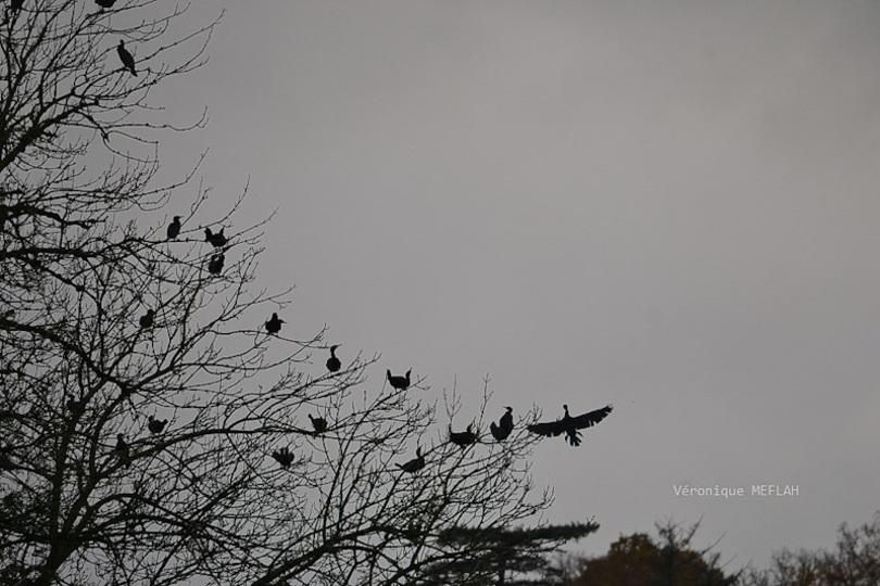 Les oiseaux en hiver : Poème de Lamartine
