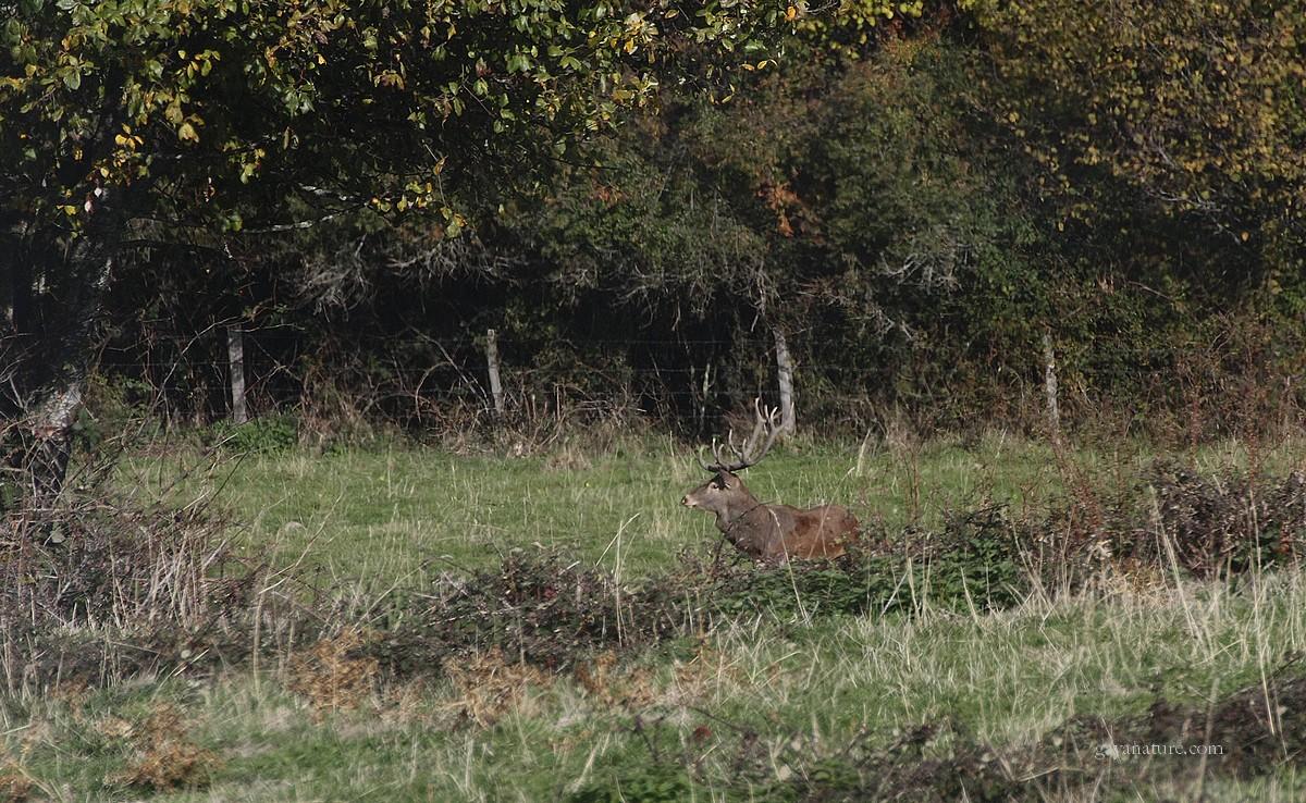 Dernière série de cerfs 2015