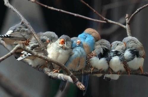 oiseaux-branche.jpg