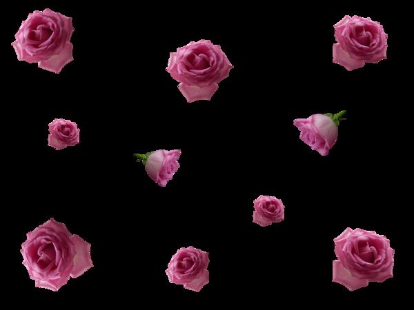 Pluie de coeurs et de roses