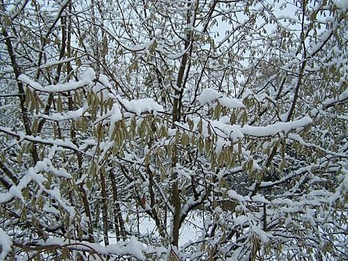 neige du 9 déc 2010 13