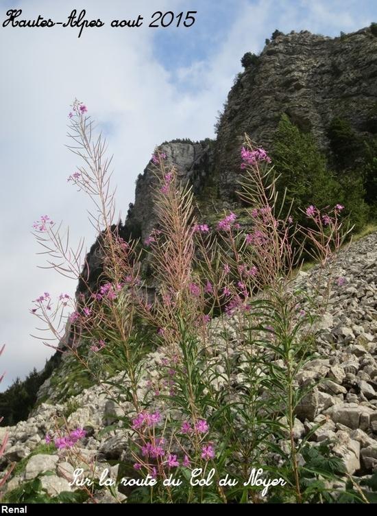 Sur la route du Col du Noyer (11)