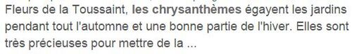 **  NOVEMBRE &  les CHRYSANTHEMES**