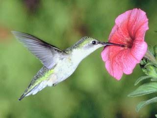 La part du colibri