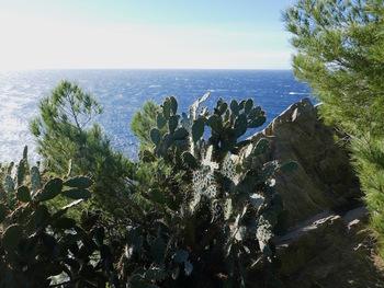 A l'Ouest de la terrasse qui est au pied du phare