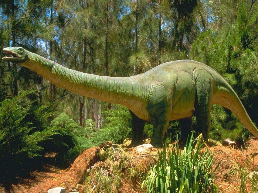6 images de Dinosaures