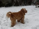 mon chien 3