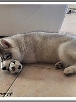Laïcko (3,5 mois)