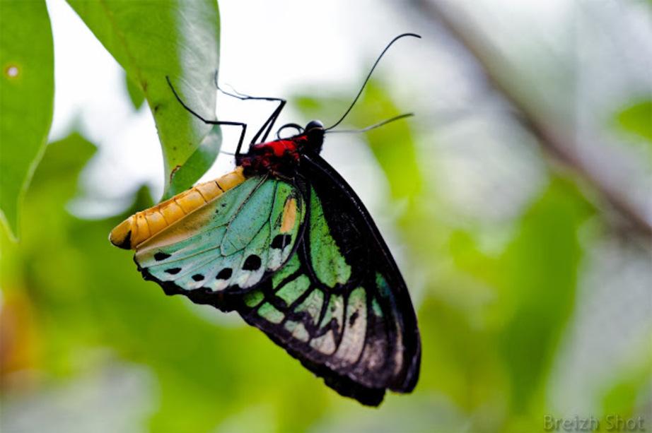 Papillon exotique - Bali