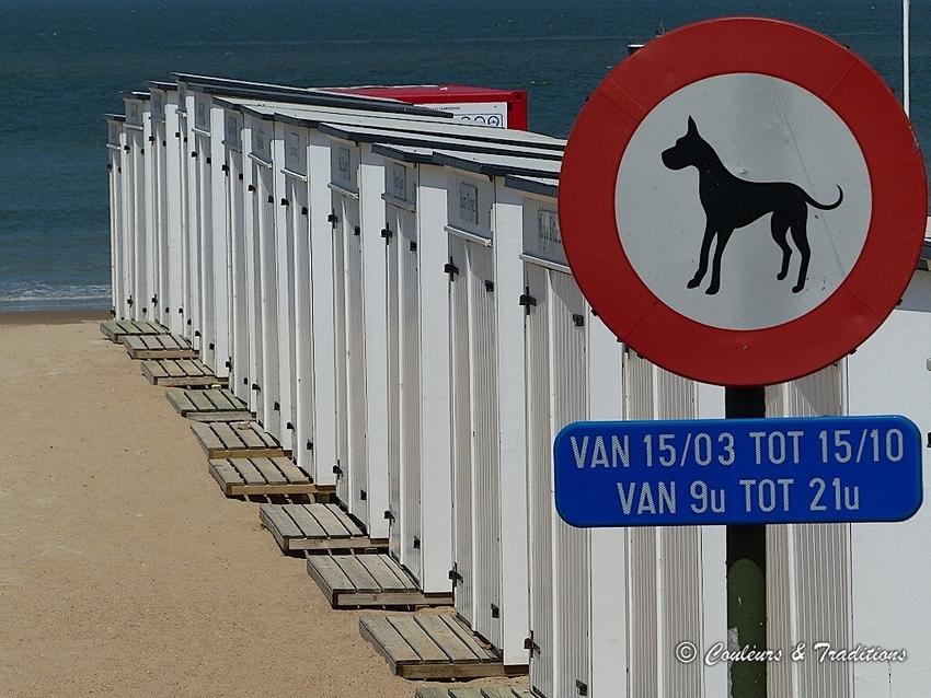 Sur le littoral Belge, les cabanes