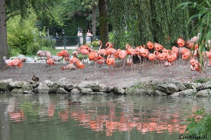 Série zoo de Beauval suite...