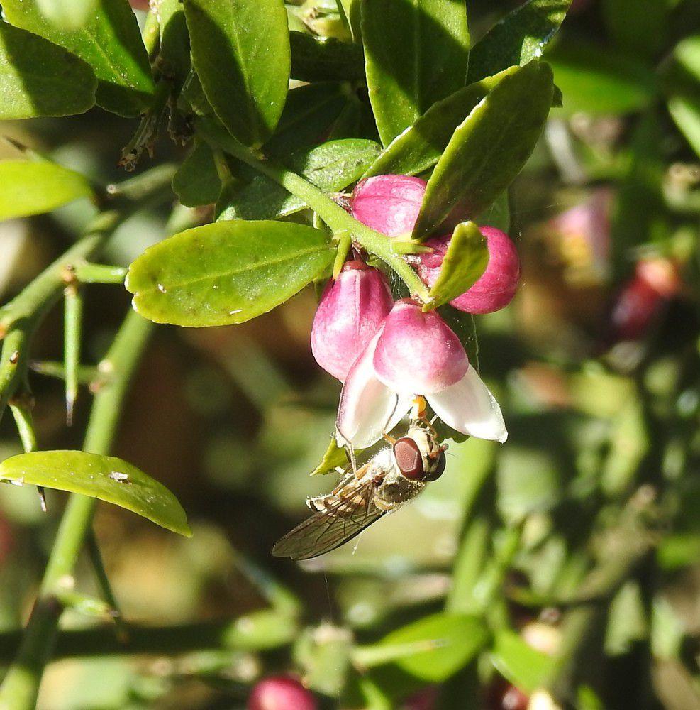20 mai, journée mondiale des abeilles...