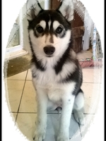 Leïka (3,5 mois)
