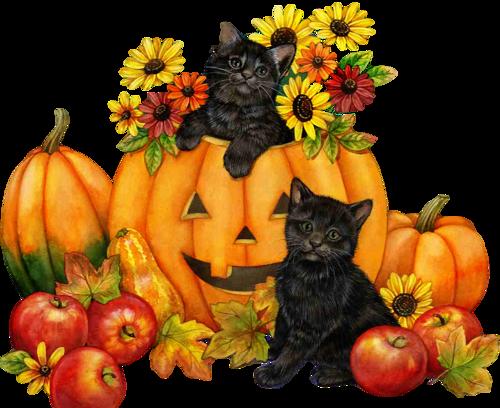 Halloween: 15 images d'Halloween