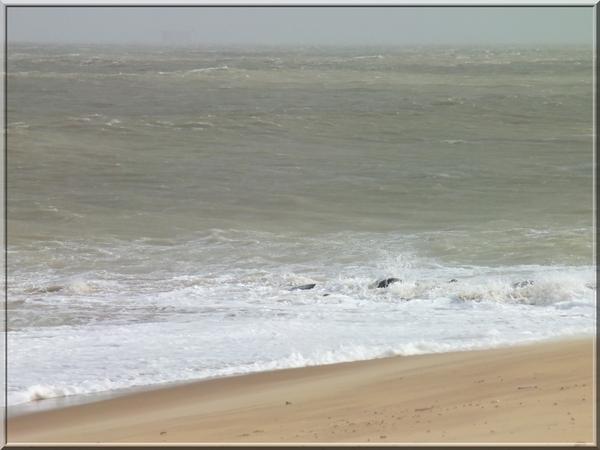 Photos,La plage de Foulerot le 6.03.217