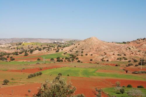 Terre rouge et oliviers un beau contraste