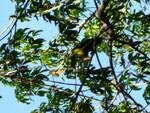 magnifique toucan