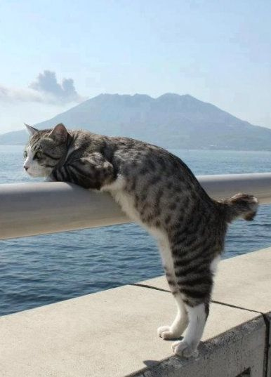 Cats are susceptible to the same damage from ultraviolet rays that humans are. This is especially true in white or light-colored cats and areas of the body that are thinly haired, such as the nose, face, and ears.