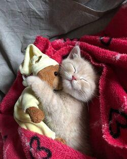 Bonne nuit minou.