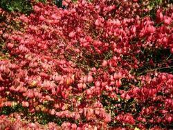 Pourquoi les feuilles rougissent ou jaunissent en automne ?