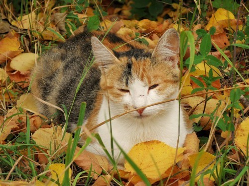chat-d-automne-8.jpg