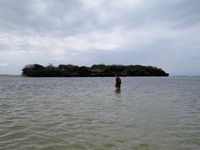 19 Août 2014... des requins et des serpents... sur Nusa Dua !