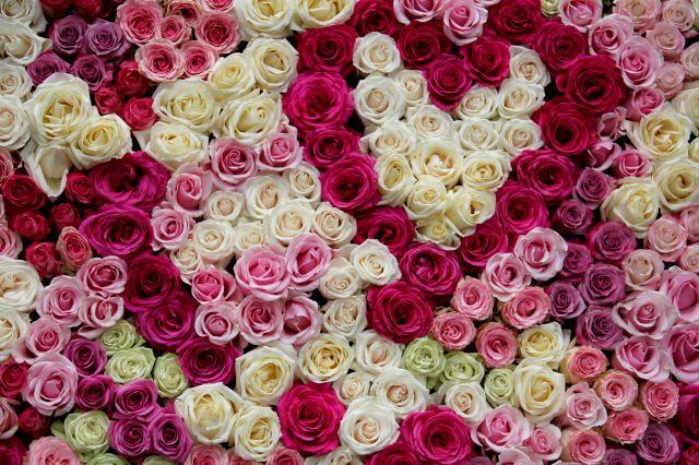 Les Journées de la Rose à Chaalis - 2016