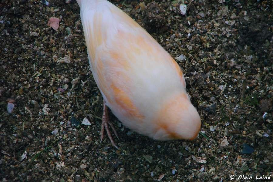 Nos amis les oiseaux - Le Thabor - Rennes (1/2)