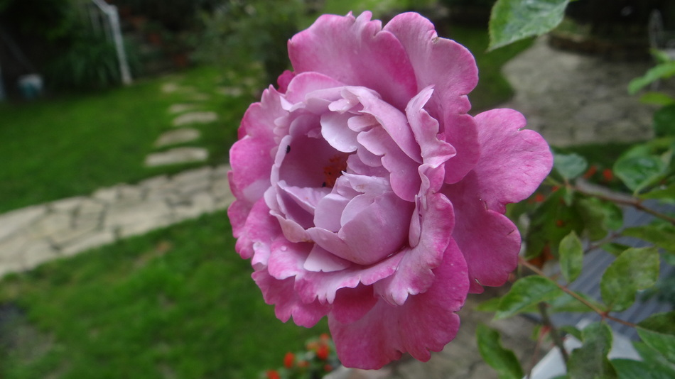 Rosier Muriel Robin