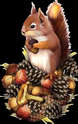 L'écureuil ........