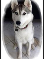Leska (3 ans)