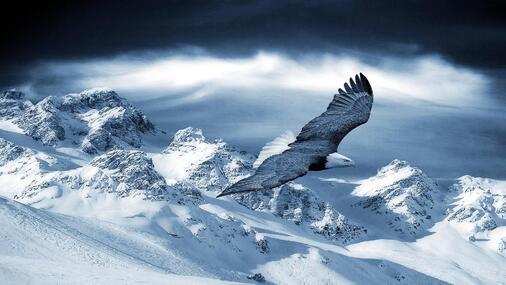 http://img.wallpaperlist.com/uploads/wallpaper/files/bal/bald-eagle-flying-above-snow-mountain-wallpaper-530f1e4e488dd.jpg?title=Pygargue%20%C3%A0%20t%C3%AAte%20blanche%20volant%20au-dessus%20de%20montagne%20de%20neige