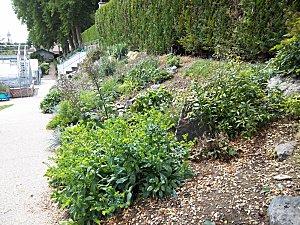 jardin des plantes d'Amiens (3)