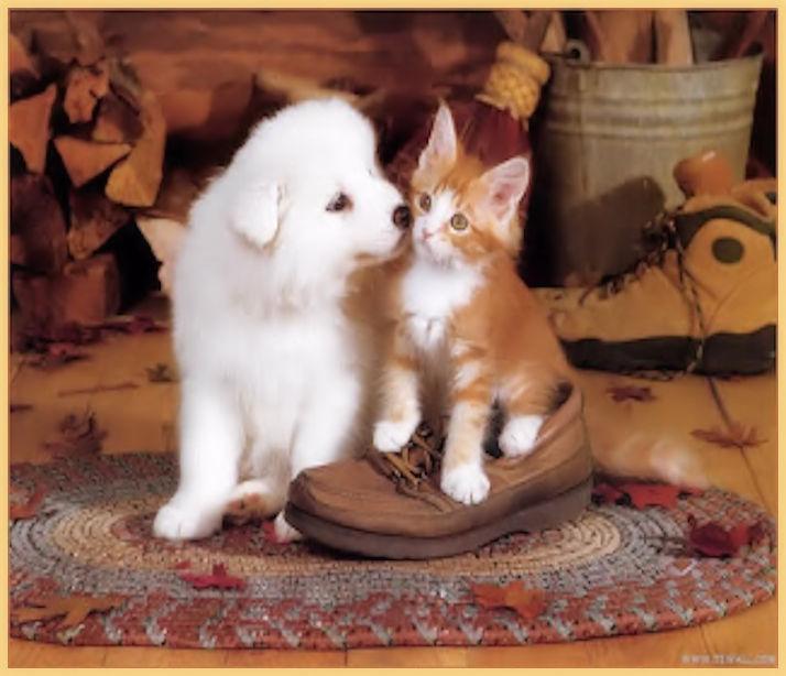 Chat et Chien  (1)
