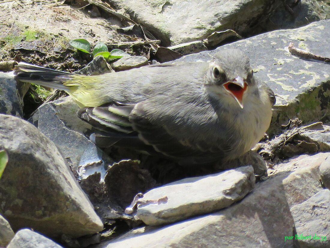 un bel oiseau et ...