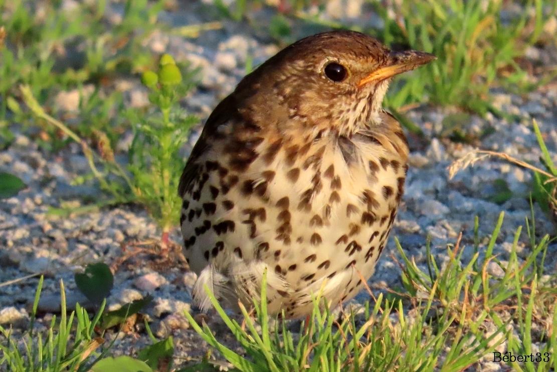 un oiseau si beau