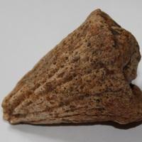 Fossile en forme de cône
