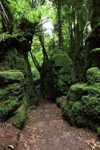 C'est une forêt extraordinaire ...