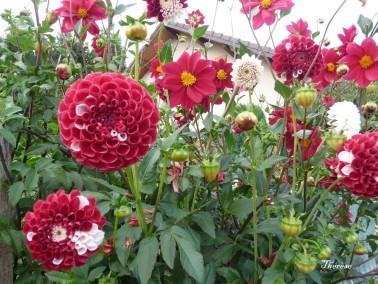 Fleurs d'automne (25)