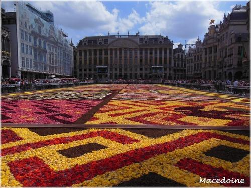 Le tapis de fleurs...suite