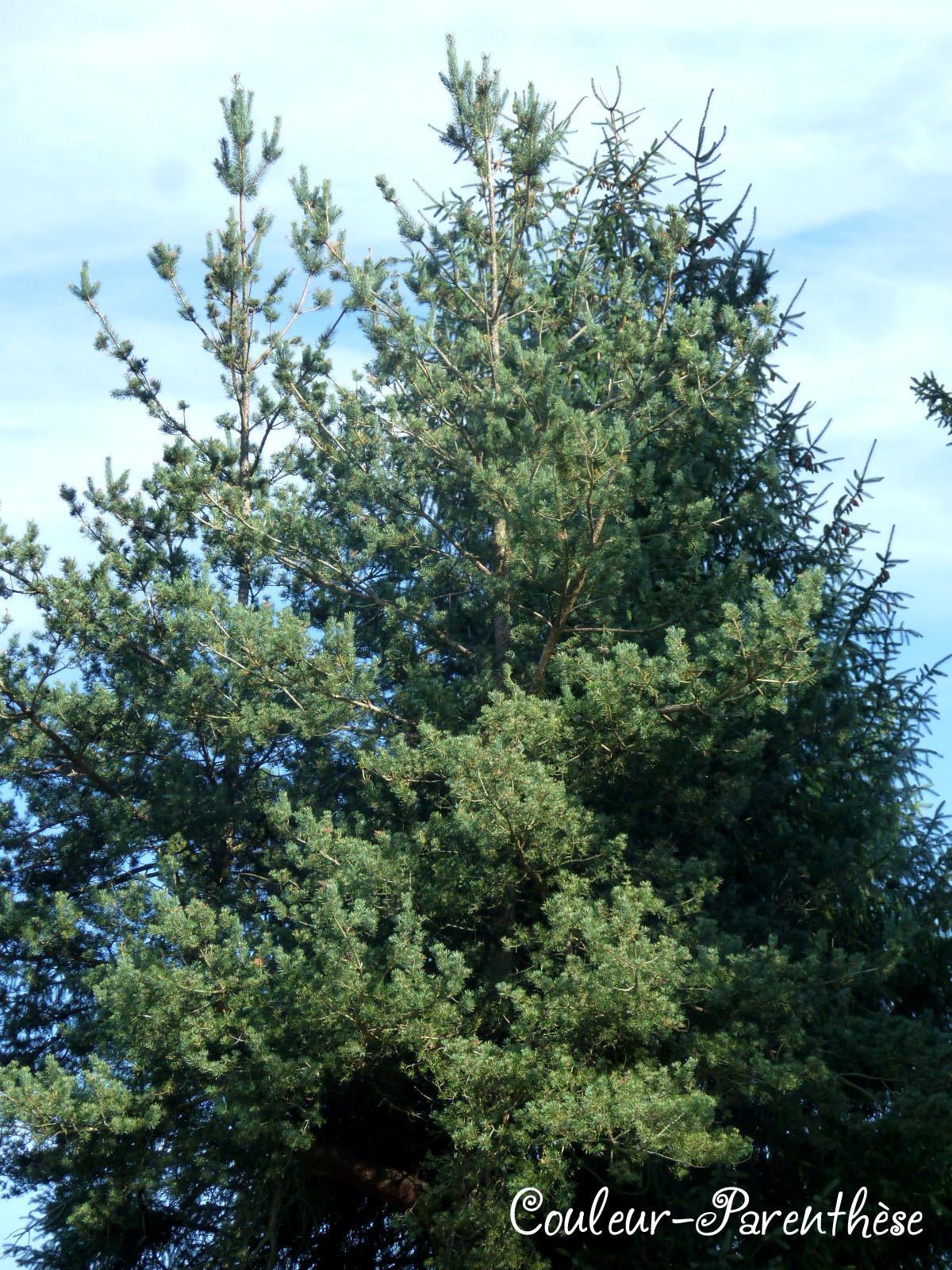 parasol - d'arbre en arbre (mazurka)