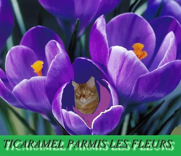 Ti Caramel parmi les fleurs