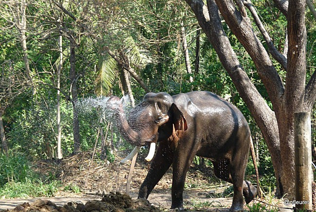 24 o1 toilette elephants 069 retouché