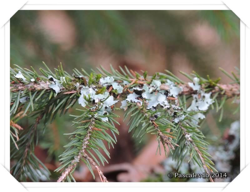 Balade en forêt - 3/8